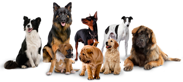 Battle No 20 Dogs-build-small-group_600px