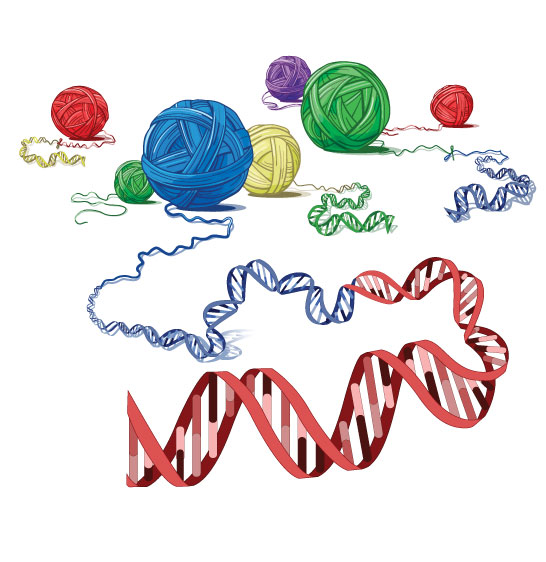 genomic rearrangements Author summary genomic architecture, such as direct or inverted repeats, can facilitate structural variation (sv) of the human genome sv can consist of deletion, duplication, or inversion.