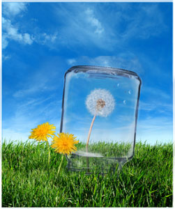 A visual metaphor for cancer stem cells: the seeds of a dandelion are prevented from scattering in the wind.