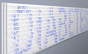 Meta-analysis finds six new gene variants linked to type 2 diabetes