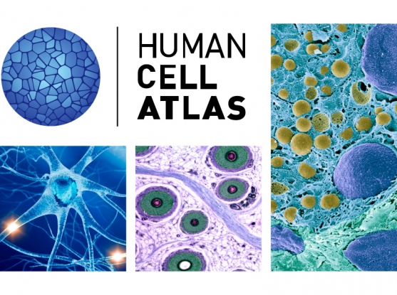 international human cell atlas initiative gets underway