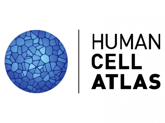 The international human cell atlas publishes strategic blueprint the international human cell atlas publishes strategic blueprint announces data from first one million cells malvernweather Gallery