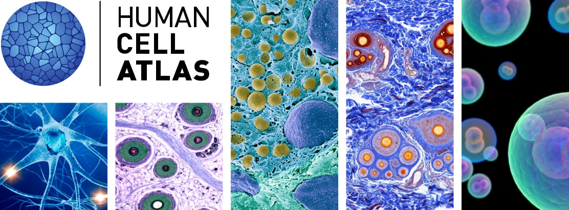 Image result for human cell atlas
