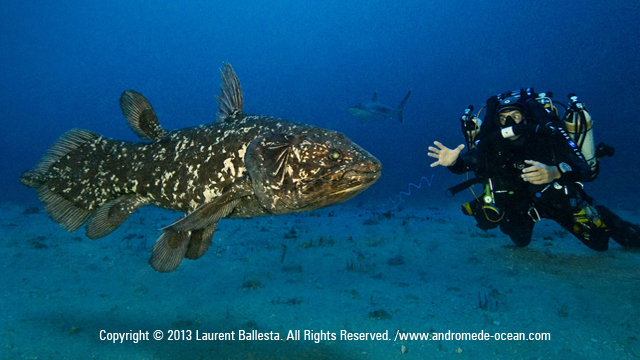 Giant Coelacanth